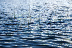 Fluss-Gras stockfoto