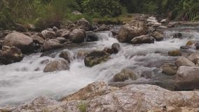 Fluss im Dschungel stock footage