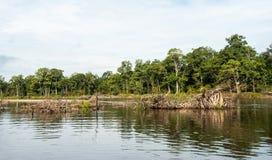 Fluss im Fernen Osten stockfotografie