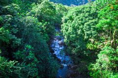 Fluss im Gebirgsdschungel Stockbilder