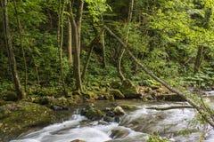 Fluss im grünen Wald Lizenzfreies Stockfoto