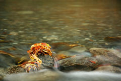 Fluss im Herbst lizenzfreie stockfotos