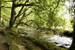 Fluss im Holz stockbild