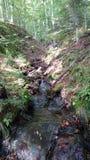 Fluss im Karpatian Lizenzfreies Stockfoto