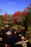 Fluss im Maine-Wald Stockfotografie