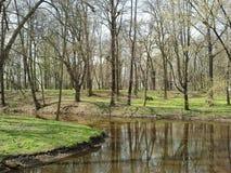 Fluss im Park Stockbild
