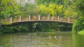 Fluss im Park und grüne Bäume mit alten Brücken stock video footage