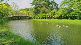 Fluss im Park und grüne Bäume mit alten Brücken stock footage