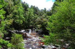 Fluss im Regenwald Stockbilder