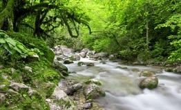Fluss im schönen Wald Stockbilder