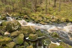 Fluss im tiefen Wald Stockbilder