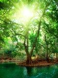 Fluss im tiefen Wald lizenzfreie stockbilder