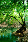 Fluss im tiefen Wald lizenzfreie stockfotos