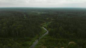 Fluss im Wald stock video