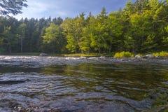 Fluss im Wald Stockfotos