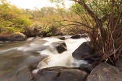 Fluss im Wald Lizenzfreie Stockfotos