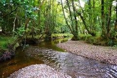 Fluss im Wald Stockbild