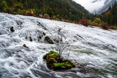 Fluss im Wald Lizenzfreies Stockfoto