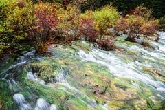 Fluss im Wald Lizenzfreie Stockbilder