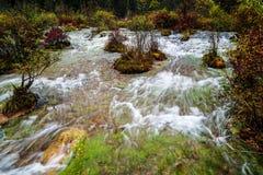 Fluss im Wald Stockfoto