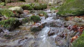 Fluss im Wald stock video
