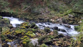 Fluss im Wald stock footage