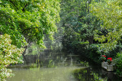 Fluss im Wald alle grüne Natur Lizenzfreie Stockbilder