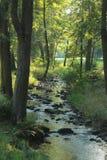 Fluss im Wald mit Steinen stockfotografie