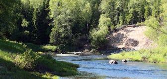 Fluss im Wald. Panorama lizenzfreie stockfotografie