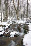 Fluss im Winterwald Lizenzfreie Stockfotos