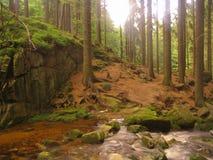 Fluss in Karkonosze Lizenzfreies Stockfoto