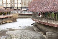 Fluss-La Valira in der Stadt von La Vella in Andorra Stockfotografie