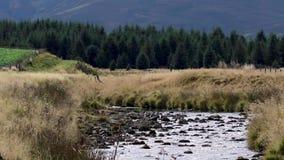 Fluss livet Laufen glatt und niedrig im glenlivet während Septembers Nationalpark Cairngormss stock footage