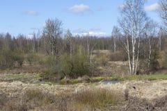 Fluss Lubja (Luppa) in Priyutino Vsevolozhsk - 27 Grad auf Celsius Lizenzfreie Stockfotos