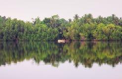 Fluss mangrover, Sri Lanka stockbild