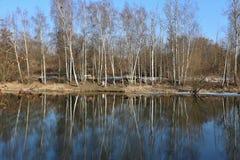 Fluss mit Bäumen auf dem Ufer Stockbild