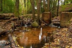 Fluss mit Baumwurzeln Lizenzfreies Stockfoto