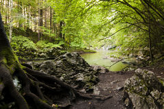 Fluss mit Felsen im Wald. Stockfotos