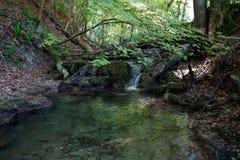 Fluss mit kleinem Wasserfall in Wald lizenzfreie stockfotografie