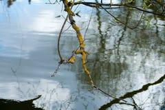 Fluss mit langsamem Fluss von grünen Bäumen lizenzfreies stockbild