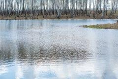 Fluss mit langsamem Fluss von grünen Bäumen lizenzfreie stockfotos