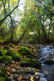 Fluss mit moosigen Steinen Stockfotografie