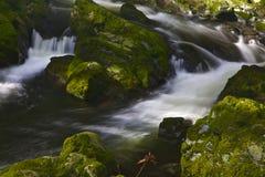 Fluss mit Riffles in Tollymore Forest Park lizenzfreies stockfoto