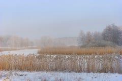 Fluss mit Schilfen im Winter stockfotos