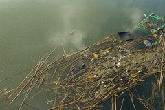 Fluss mit sich hin- und herbewegendem Abfall, Natur und Umwelt Lizenzfreie Stockbilder