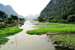 Fluss mit Wasserlilie und Grünpflanze Lizenzfreies Stockbild