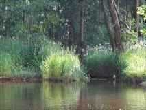 Fluss in Mittelrußland stock video