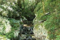 Fluss mitten in dem Wald Lizenzfreies Stockfoto