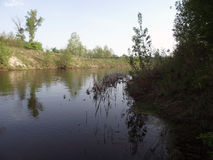 Fluss mitten in dem Wald Lizenzfreie Stockfotos