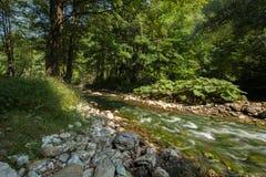 Fluss. Naturzusammensetzung Stockfotos